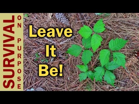 How To Identify Poison Ivy - Survival Skills