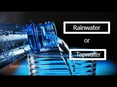 Rainwater or Tapwater for Plants