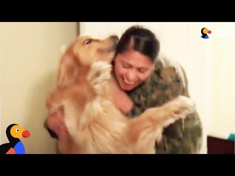 Dog Goes Crazy Every Time Marine Mom Comes Home - OSHIE | The Dodo
