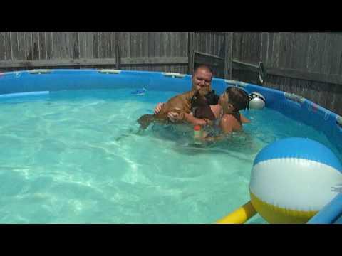 Boxer Dog swimming in pool