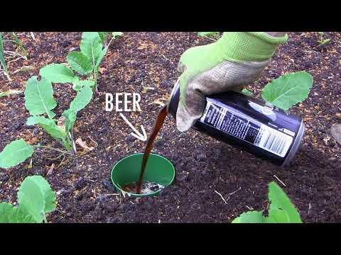Dealing With Slugs in Your Garden