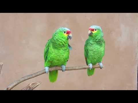 Parrots say