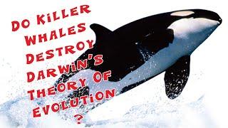 Killer Whales -- Zombie Science Author Explains a Fatal Challenge to Evolution