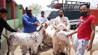 Rajan Puri a Blackberry Mohammad Sabir got farm Dera Ghazi