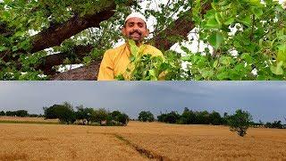 🌧️ Punjab Ka Mausam Kharab Hogaya 🌧️  Allah khair kare   🌧️ . گندم کی فصل یک گی