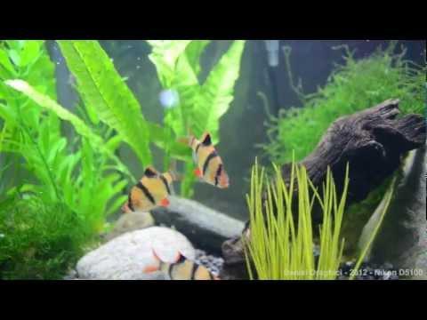 Aquarium Video - Nikon D5100 1080p Video (Auto settings)