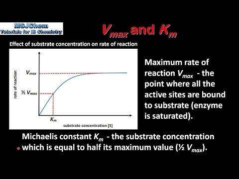 B.7 Vmax and Km (HL)
