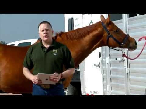 Protect your show horse from infectious disease