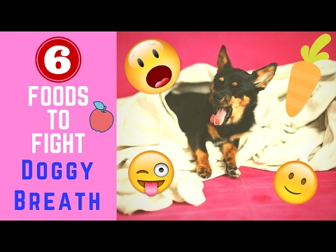 6 Foods to Fight Doggy Breath