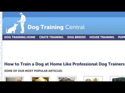 How-To Stop Male Dogs From Peeing In The House