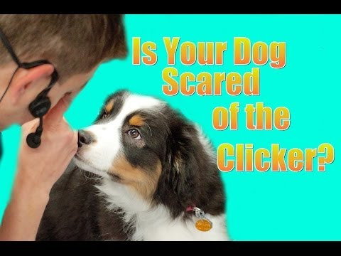What if your dog is scared of the clicker?