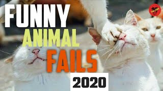 Funny Animal Fails Compilation - Best Animal Fails 2020