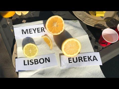 Meyer vs. Eureka vs. Lisbon |  TASTE TEST |  80% Of People Prefer The ?????? Lemon