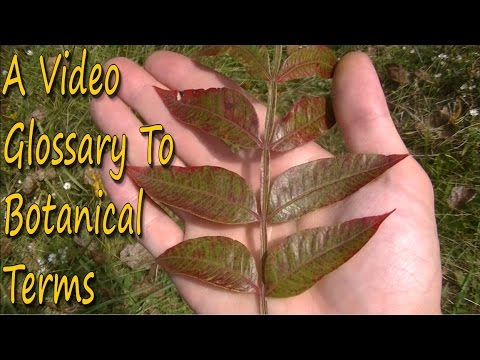How To Identify Wild Plants - A Guide To Botanical Terms