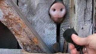 Totally Random Funny Videos of Week #13 Try Not To Laugh