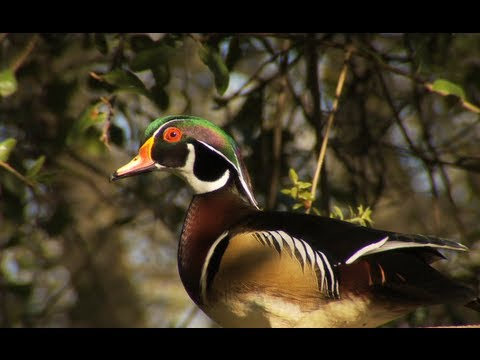 Deb & Stu Greenberg's Wood Duck Pond