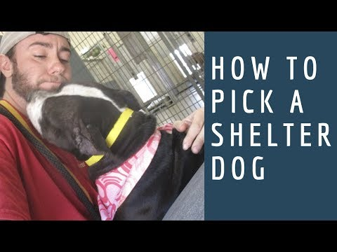 How to Adopt a Dog Ep. 3: How to Pick a Shelter Dog