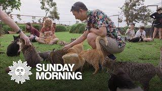 Island-Hopping:  The Lanai Cat Sanctuary