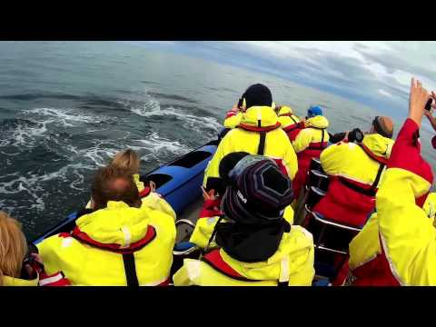 Whale watching, Iceland, Husavik