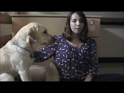 Should You Get a Guide Dog?