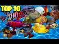 The Top (10) Ten Most Colorful Freshwater Fish In The Aquarium Hobby