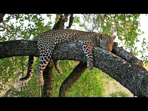 Singapore Zoo Night Safari Tour