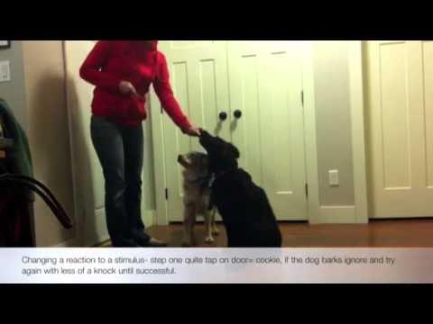 Stop dog barking at the door