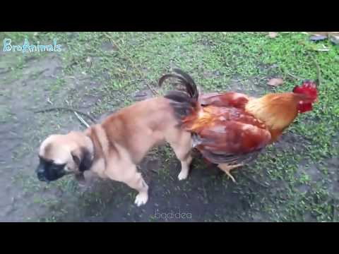 Xxx Mp4 Try Not To Laugh Compilation 7 Best Funny Dogs Videos FUNNIEST ANIMAL VIDEOS 2018 🐶🐶🐶🐶 3gp Sex