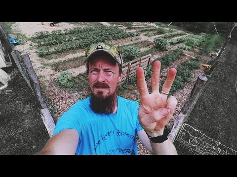 If I Had To Pick ONLY Three Crops For A Survival Garden...