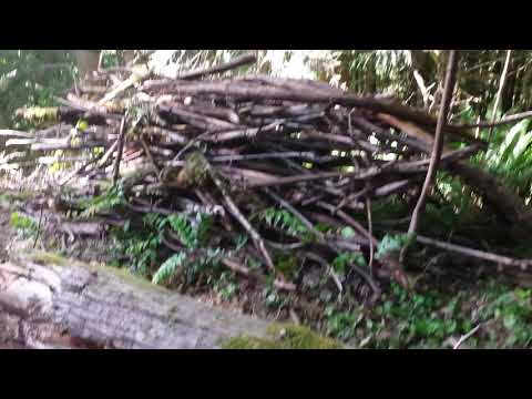 A days harvest of firewood