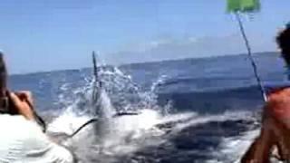 Marlin trespassa boca de rapaz
