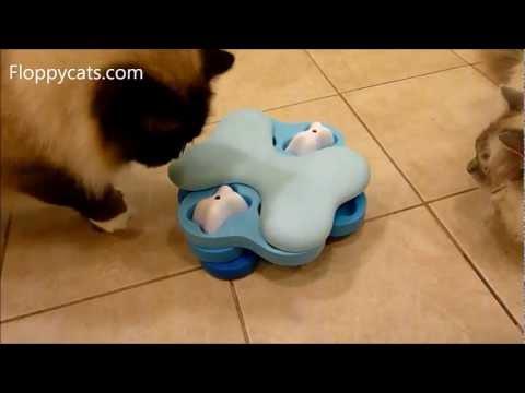 Ragdoll Cats Review Nina Ottosson Dog Tornado Cat Puzzle Toy - ねこ - ラグドール - Floppycats