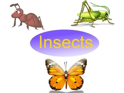 Names of insects for kids, Insects Flash Cards