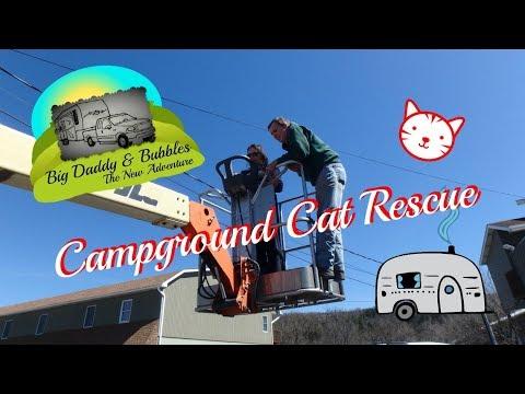 Campground Cat Rescue