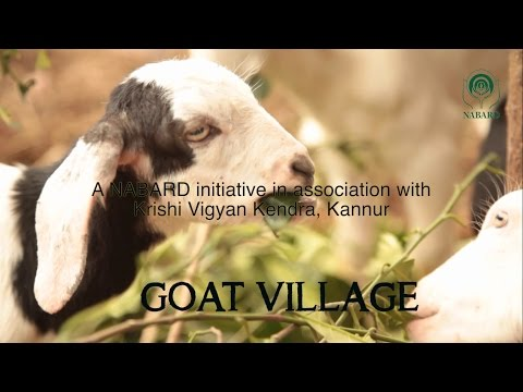 Goat Village