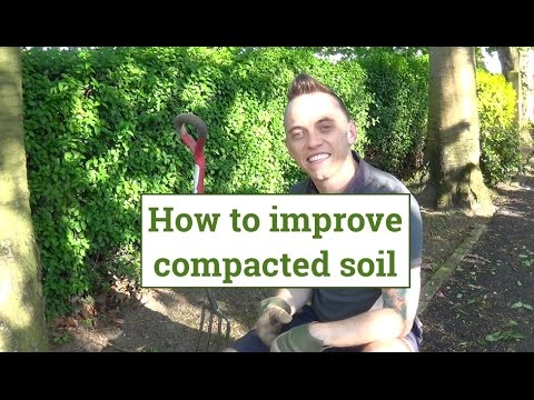 How to loosen & improve compacted soil