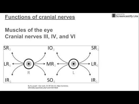Functions of Cranial Nerves (and eye movements)