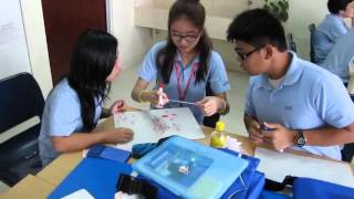 Dividing Rational Numbers Jigsaw Activity
