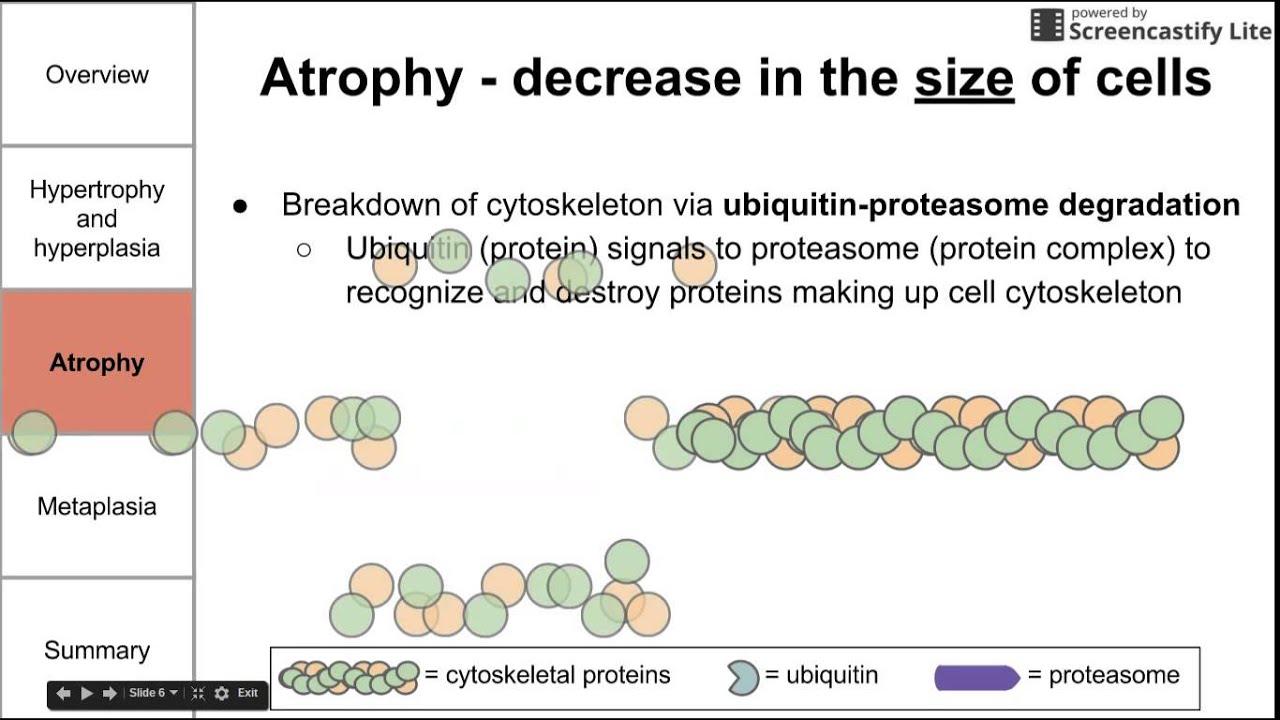 Cellular adaptations