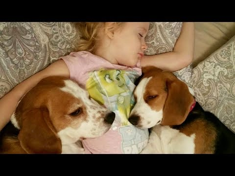 Little Girl and Lazy Dogs Don't Want Get Out Of Bed | Charlie the dog, Baby Laura and Puppy Lilly