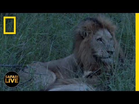 Safari Live - Day 125 | National Geographic