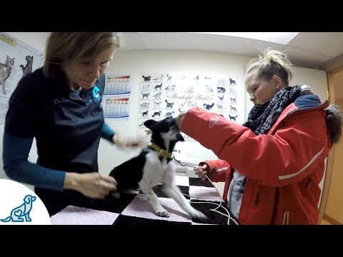 Puppy Vet Visit- Tips To Keep Your Puppy Calm