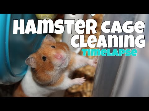 *Timelapse* Cleaning a Hamster Bin Cage (feat. Arwen the Syrian Hamster)