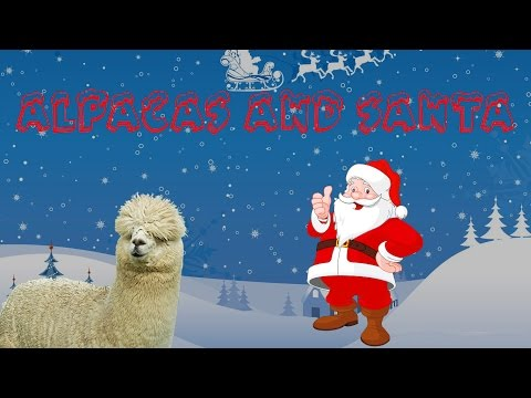 Christmas Alpaca Adventure!!