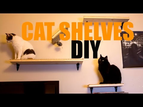 Building DIY WALL SHELVES for CATS! / CATCRAFT