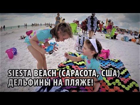 62# Пляж Siesta beach в Сарасоте (Флорида, США). Дельфины на пляже!