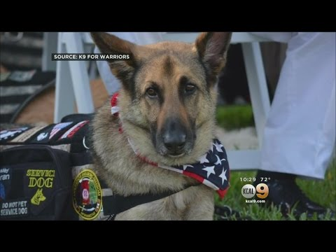 Marine Corps Veteran Says Service Dog Was Denied Entry On American Airlines Flight