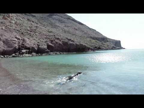 Exitoso desenmalle y liberación de lobo marino