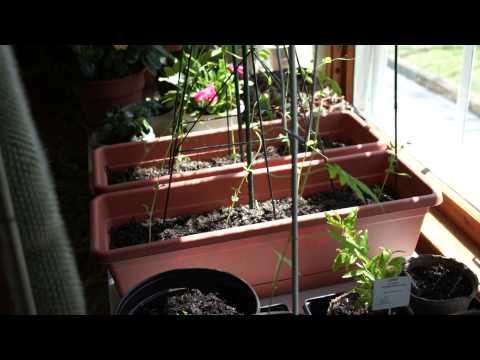 Indoor Garden, April 2013, Southern Window Exposure....all plants doing well