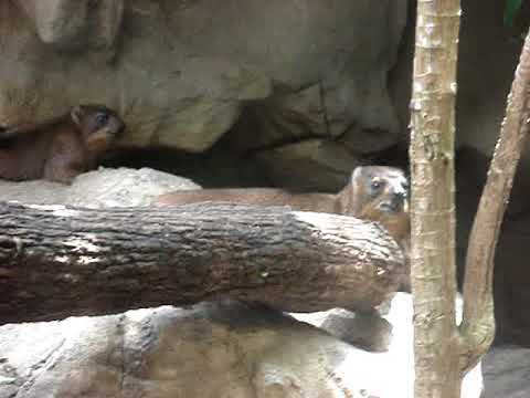 Sentosa Island-Singapore Zoo (Part 16)